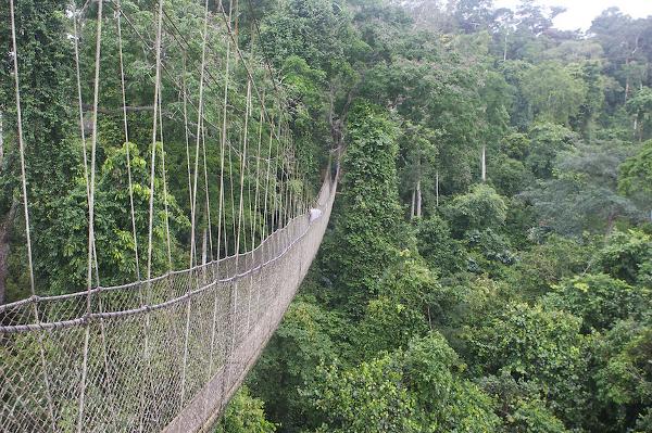 Canopy Walk Bridge Ghana