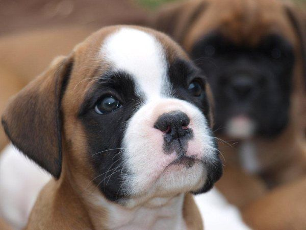 10 Cutest Dog Breeds Of All Time - ListAmaze