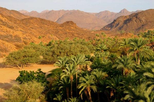 Timia Oasis