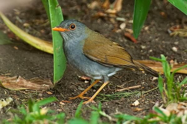 Nightingale Poop