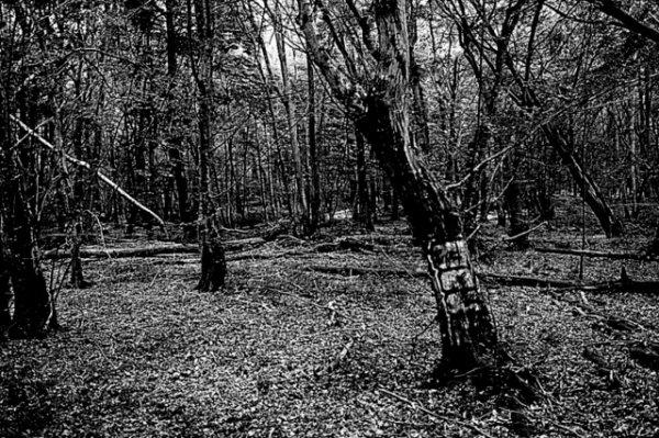 Dering Wood