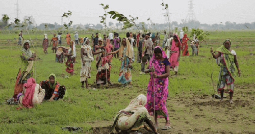50 million trees within 24 hours Planted in an Indian Village in 24 Hours