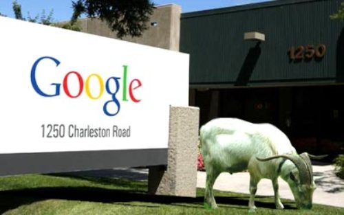 Google Hires Goat Flocks To Chew Away Grass