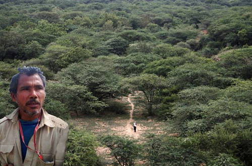 Molai Forest and the Forest Man