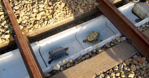 Turtle Tunnels in Japan