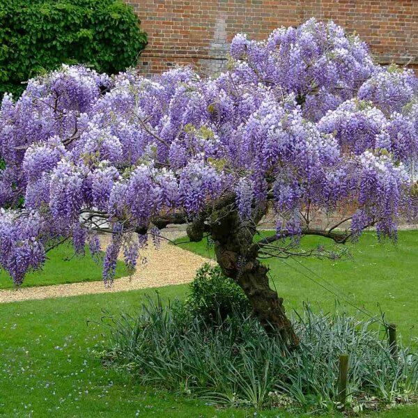 10 Most Beautiful Trees In The World Listamaze