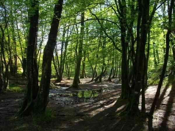 Broceilande Forest