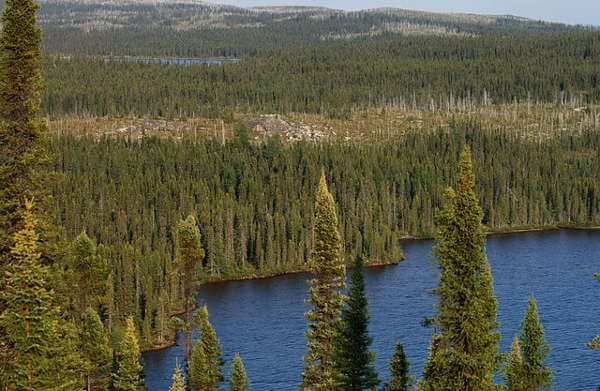 Canadian Boreal Forest